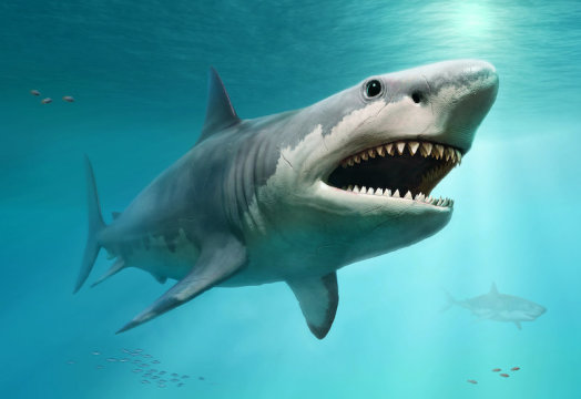 True size of prehistoric mega-shark finally revealed